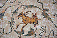 Picture of a Roman mosaics design depicting scenes from the Life of Dionysus, detail of an animal and tendrils, from the ancient Roman city of Thysdrus, House of Silenus. Late 2nd to early 3rd century AD. El Djem Archaeological Museum, El Djem, Tunisia. .<br /> <br /> If you prefer to buy from our ALAMY PHOTO LIBRARY  Collection visit : https://www.alamy.com/portfolio/paul-williams-funkystock/roman-mosaic.html  . Type -   El Djem   - into the LOWER SEARCH WITHIN GALLERY box. Refine search by adding background colour, place, museum etc<br /> <br /> Visit our ROMAN MOSAIC PHOTO COLLECTIONS for more photos to download  as wall art prints https://funkystock.photoshelter.com/gallery-collection/Roman-Mosaics-Art-Pictures-Images/C0000LcfNel7FpLI