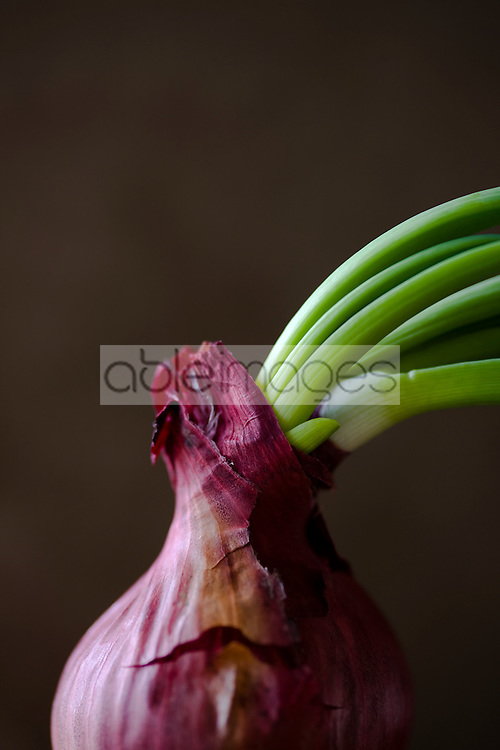 Close up of red onion