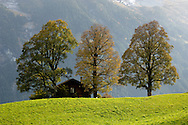 Alpine Pastures with Autumn Trees - Grinderwald - Alps - Switzerland .<br /> <br /> Visit our SWITZERLAND  & ALPS PHOTO COLLECTIONS for more  photos  to browse of  download or buy as prints https://funkystock.photoshelter.com/gallery-collection/Pictures-Images-of-Switzerland-Photos-of-Swiss-Alps-Landmark-Sites/C0000DPgRJMSrQ3U