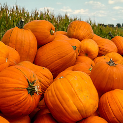 Pumpkins and gourds are plentiful in early autumn in Lancaster County PA.
