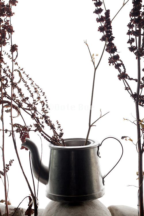 silhouette of wilted upside down placed flower bouquet with old teapot
