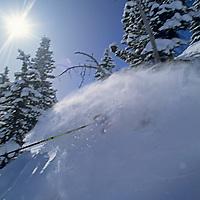 SKIING, Montana, Sinuhe Shrecengost (MR) powder skiing.