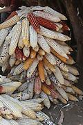 Africa, Ethiopia, Konso tribe corn larder