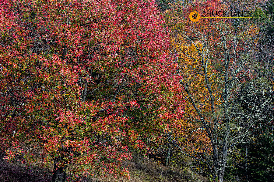 Autumn color in hardwood forest in Randolph County, West Virginia, USA