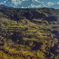 The Annapurna massif towers behind terraced hillside in Nepal.