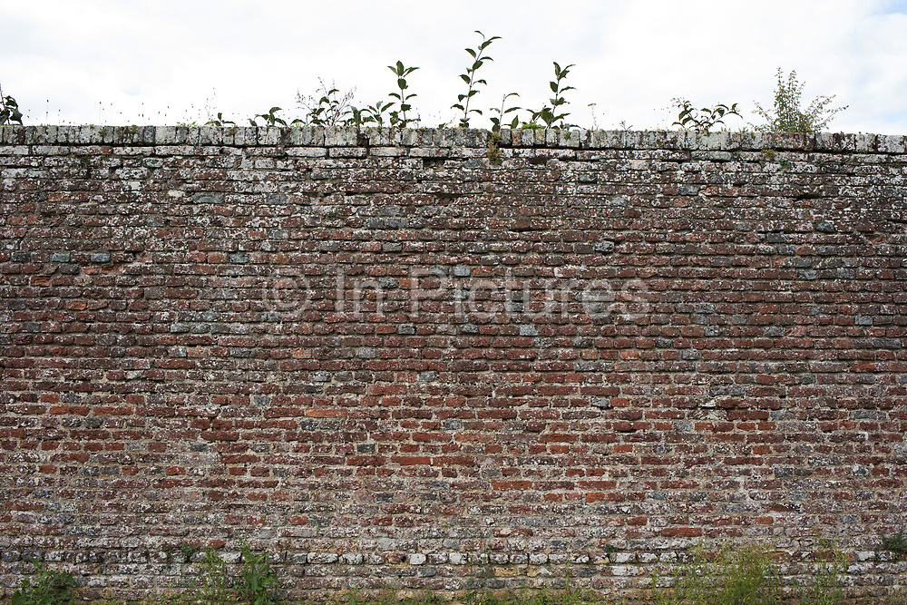 Wall at Hever Castle in Hever, England, United Kingdom.