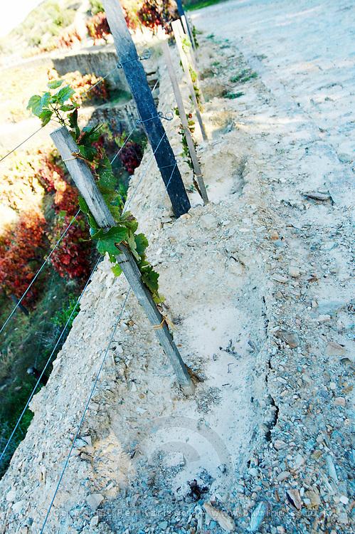 recently planted vines vineyard quinta do seixo sandeman douro portugal