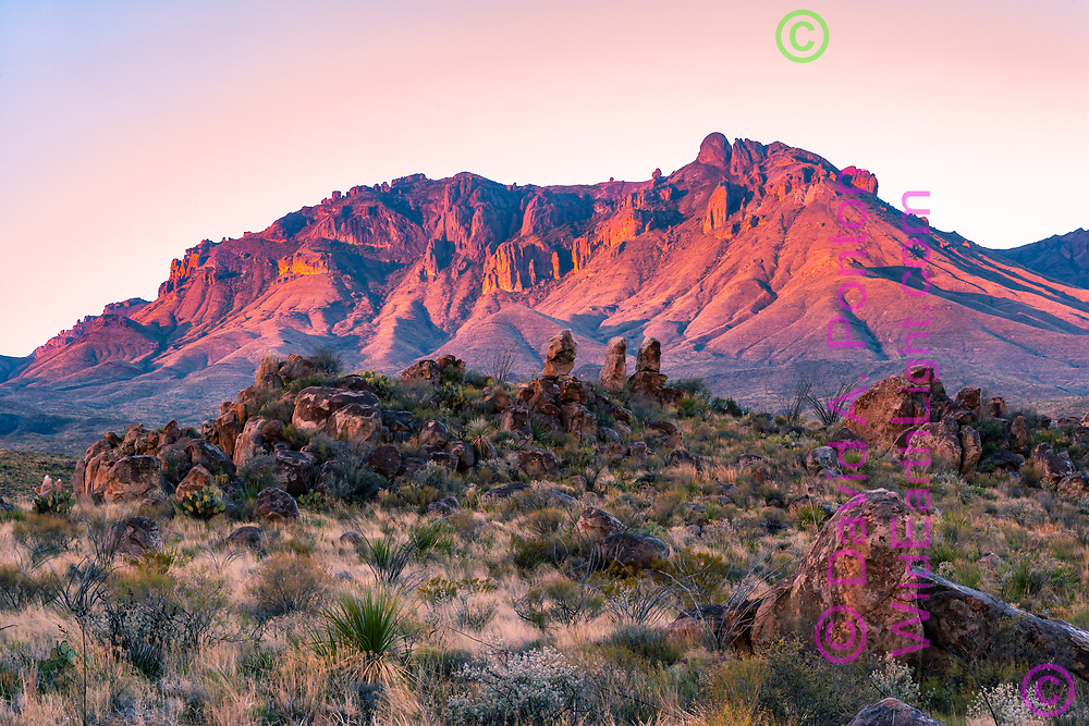 Sunrise alpenglow on the Chisos Mountains with standing rocks on a hill in the Chihuahuan Desert, Big Bend National Park, TX, © David A. Ponton
