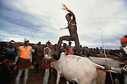 While men hold a row of bullocks still a Hamar initiate runs over their backs at a bull jumping ritual, in South Omo, Ethiopia. By successfully completing the bull jump a Hamar man becomes eligible for marriage. The 40,000-strong, cattle-herding Hamar are among the largest of the 20 or so ethnic groups which inhabit the culturally diverse South Omo region in south-west Ethiopia.