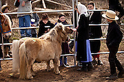 Amish children with a miniature horse during the Annual Mud Sale to support the Fire Department  in Gordonville, PA.