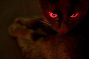 Sao Paulo_SP, Bar..Detalhe dos olhos do gato (Felis silvestris catus) no escuro...Eyes cat (Felis silvestris catus) detail in the dark...Foto: MARCUS DESIMONI /  NITRO