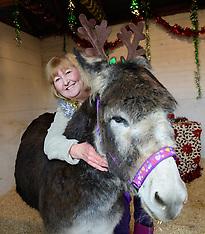 161213 - Alan the Christmas Donkey