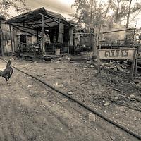 Chicken walks through fishing village Sihanoukville, Cambodia