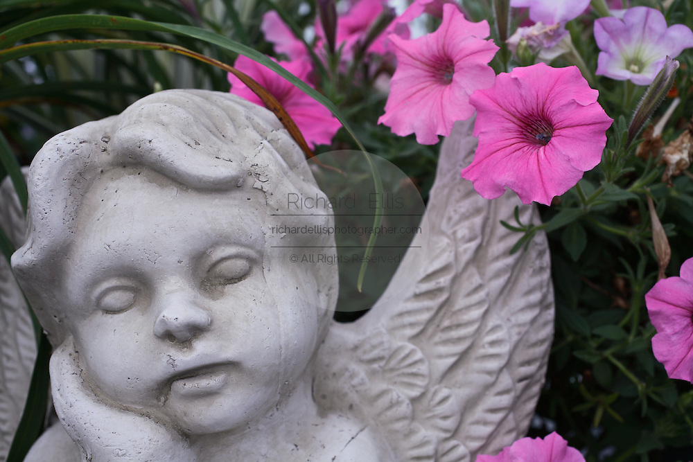 Pink petunias grow over a statue of a cherub in a garden in Mount Pleasant, SC