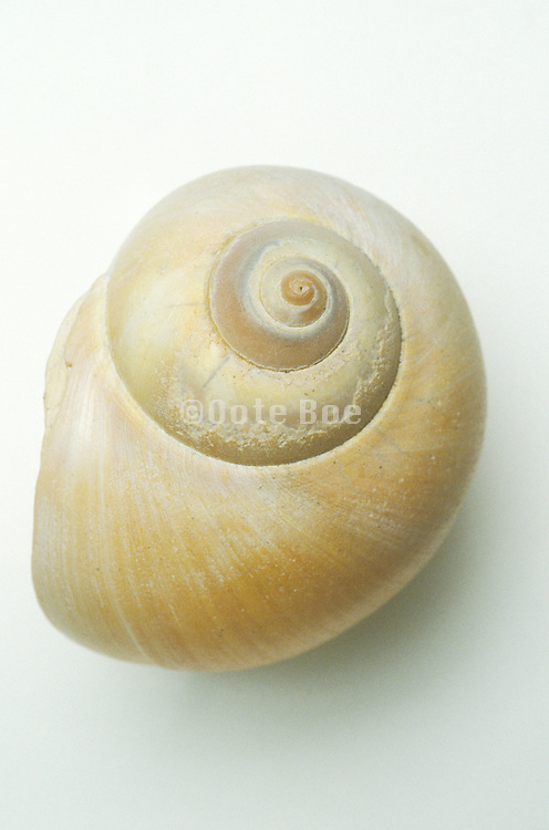 close up of snail shell