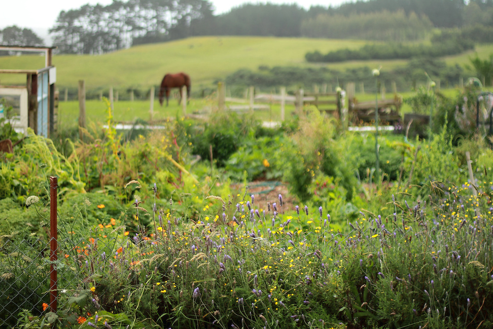 One of the organic vegetable gardens at Black Sheep Animal Sanctuary, providing plenty of food for sanctuary staff and important habitat for insects and birds.