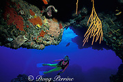 diver peers into a cave with sea whip, Nicella sp., Cozumel, Mexico, ( Caribbean Sea )  MR 140 -MR 142