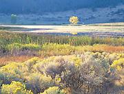 Autumn Afternoon, Banks Lake, WA.
