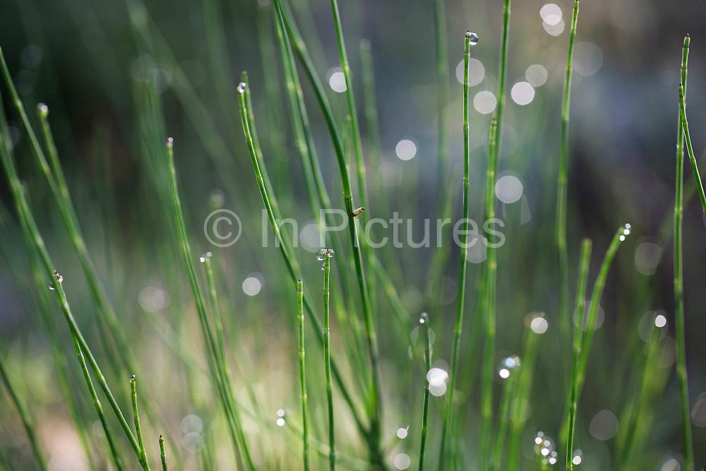Droplets of dew gather on plant stalks, sparkling in the morning sunshine.