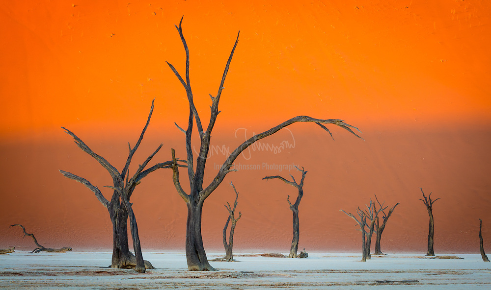 """Deadvlei is a white clay pan located near the more famous salt pan of Sossusvlei, inside the Namib-Naukluft Park in Namibia. Also written DeadVlei or Dead Vlei, its name means """"dead marsh"""" (from English dead, and Afrikaans vlei, a lake or marsh in a valley between the dunes). The pan also is referred to as """"Dooie Vlei"""" which is the (presumably original) fully Afrikaans name. <br /> <br /> Dead Vlei has been claimed to be surrounded by the highest sand dunes in the world, the highest reaching 300-400 meters (350m on average, named """"Big Daddy"""" or """"Crazy Dune""""), which rest on a sandstone terrace.<br /> <br /> The clay pan was formed after rainfall, when the Tsauchab river flooded, creating temporary shallow pools where the abundance of water allowed camel thorn trees to grow. When the climate changed, drought hit the area, and sand dunes encroached on the pan, which blocked the river from the area.<br /> <br /> The trees died, as there no longer was enough water to survive. There are some species of plants remaining, such as salsola and clumps of !nara, adapted to surviving off the morning mist and very rare rainfall. The remaining skeletons of the trees, which are believed to have died 600-700 years ago (1340- 1430), are now black because the intense sun has scorched them. Though not petrified, the wood does not decompose because it is so dry."""