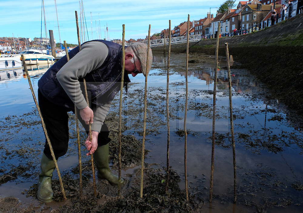 """© Licensed to London News Pictures. <br /> 13/05/2015. <br /> <br /> Whitby, United Kingdom<br /> <br /> Lol Hodgson, the Baliff of the Manor of Fyling carries out the ancient Penny Hedge tradition in Whitby.<br /> <br /> The beginnings of this ancient custom dating back to around 1159 are unclear but some say it was penance for the accidental killing of a hermit who was a monk at the abbey. Others say it was to mark a safe landing place or to mark a garth or enclosure or simply to keep out animals.<br /> <br /> However this now symbolic custom takes place each year on the eve of Ascension Day on the banks of the River Esk in Whitby and is constructed with nine upright hazel stakes driven into the mud with an ancient mallet and nine 'tethers' or pliant branches to intertwine the stakes.<br /> <br /> Completion of the hedge is followed by three blasts on an ancient horn and the cry of """"Out on Ye"""" is repeated by the bailiff.<br /> <br /> Photo credit : Ian Forsyth/LNP"""