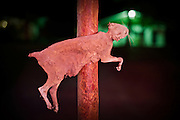 "A dead cat. Road bar near Elko, Nevada...Images to illustrate the road and the people you meet along the way on a trip across the USA...A 4-weeks road trip across the USA, from New York to San Francisco, on the steps of Jack Kerouac's famous book ""On the Road"".  Focusing on nomadic America: people that live on the move across the US, out of ideology or for work reasons."
