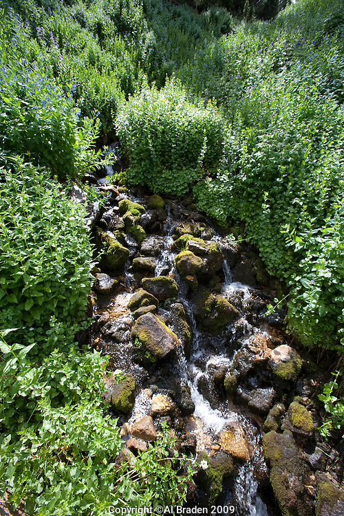 Glacier Creek, near Tourquoise Lake, Leadville, CO.
