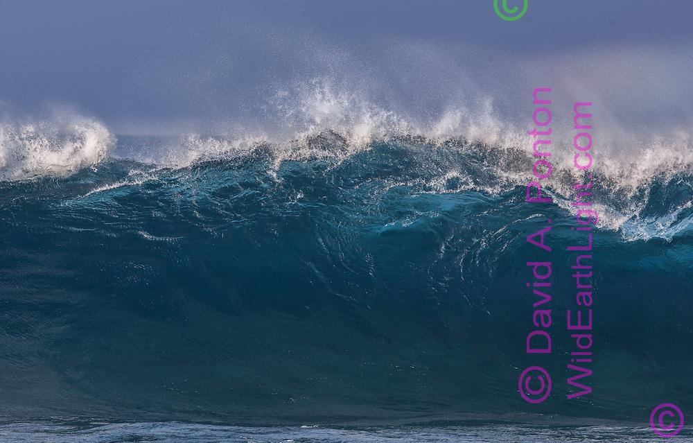 Large incoming ocean wave breaking in an aqua curl, Hawaii, © David A. Ponton