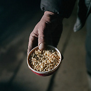 Breakfast of puffed rice on top of salty milk tea. Life at Mr and Ms Wangchuk's house on the edge of the Laya village.