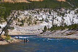 Fly-fishing, Yellowstone river, yellowstone national park