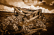 Fine Art<br /> Lost Roll of color film from trip to New Mexico. This old shack had noting left but old rotten wood surrounded by flowers. Film Grain & Old Film