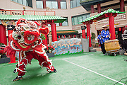 Feb. 8, 2009 -- PHOENIX, AZ: Lion dancers perform at the Chinese Cultural Center in Phoenix, AZ. Chinese around the world celebrated the New Year this month. This is the Year of the Ox in the Chinese calender.  PHOTO BY JACK KURTZ