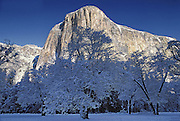 Yosemite El Capitan and trees with snow in winter time.