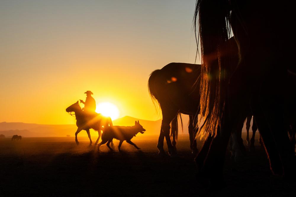 Wild horses, Cappadocia, Turkey