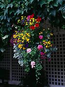 Hanging basket in the Italian Garden at Butchart Gardens near Victoria, British Columbia, Canada.