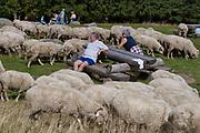 Owce na Rusinowej Polanie, Tatry, Polska<br /> Sheep on Rusinowa Glade, Tatra Mountains, Poland