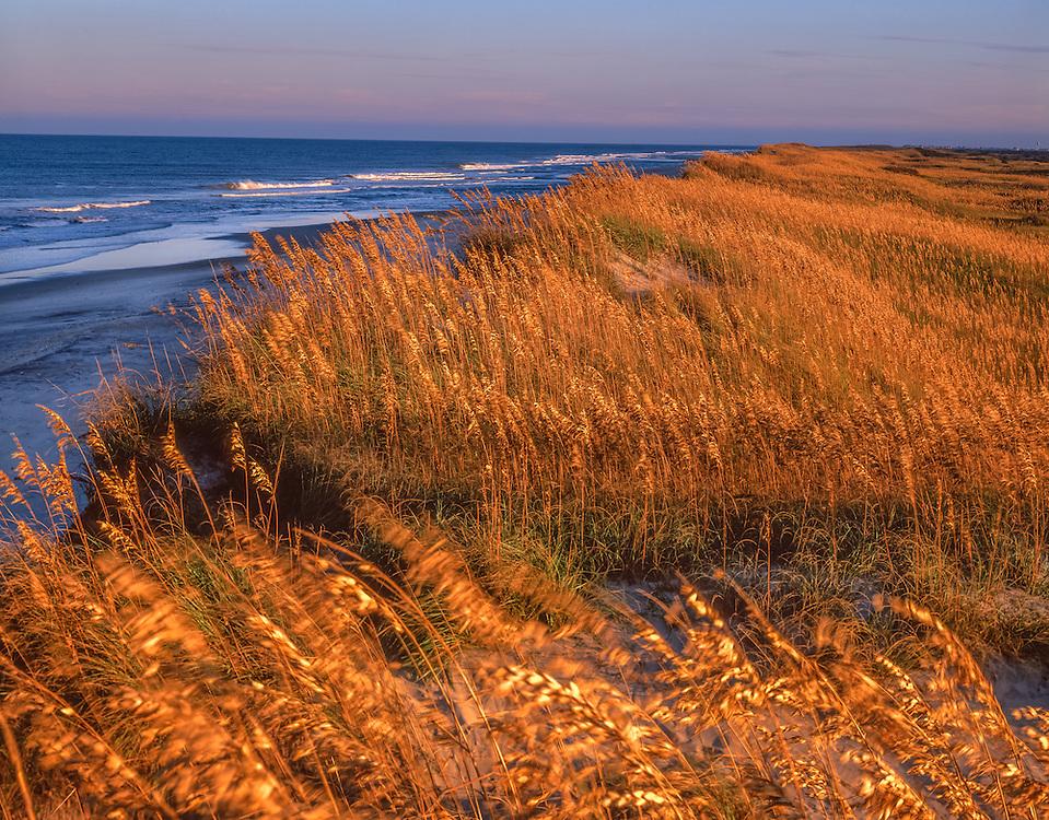 Atlantic Ocean, sea oats, dunes & surf at last light, Pea Island, NC