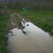 Dirt road in fields near the village of Nakolec, FYR Macedonia