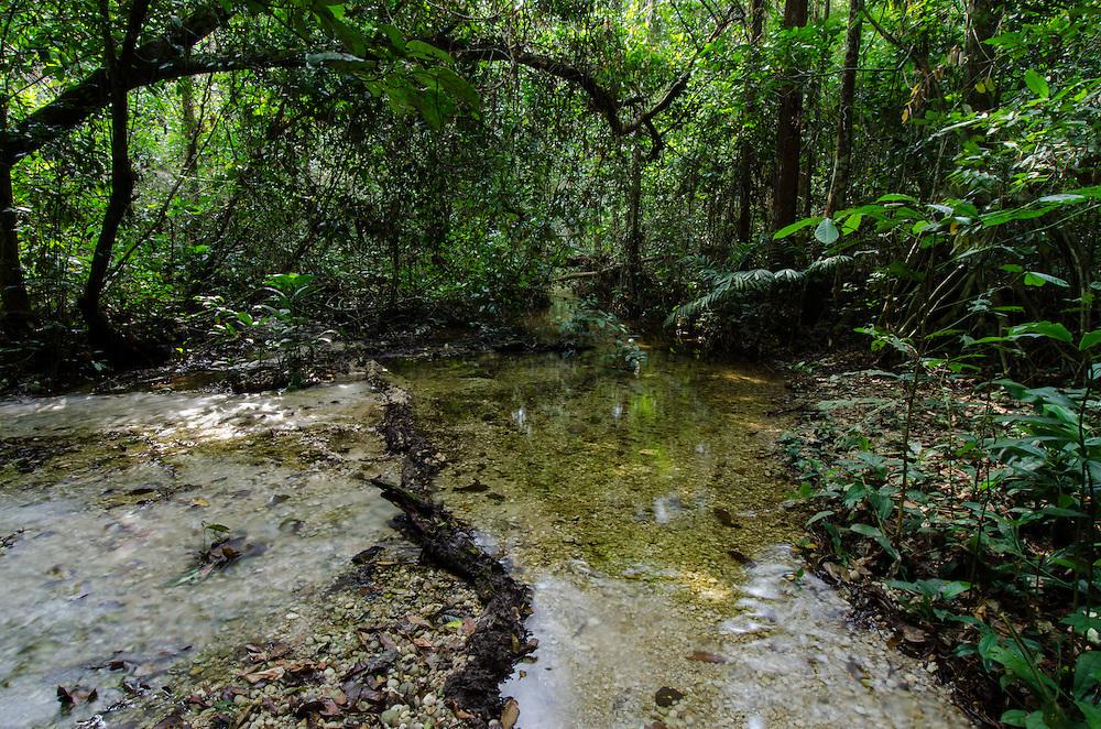Stream<br /> Rain forest understory<br /> Odzala - Kokoua National Park<br /> Republic of Congo (Congo - Brazzaville)<br /> AFRICA