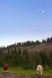 Photographer, moon, mountain goat, Glacier National Park