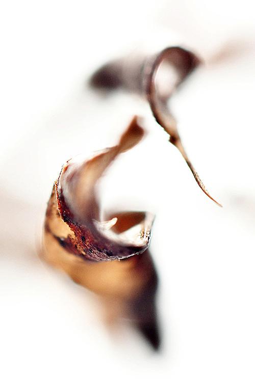 Foglie secche / dry leaves<br /> Photo Antonietta Baldassarre