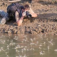 Tiszavirágzás fotósok - Photographers at Blooming of Tisza