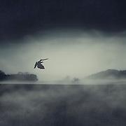 Rural landscape with a bird - monochrome photograph