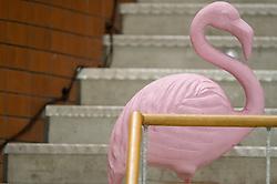 20-02-2016 NED: Coolen Alterno - Eurosped TVT, Almere<br /> Eurosped wint met 3-2 van Alterno en speelt morgen de finale / Mascotte Flamingo