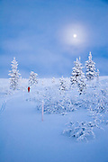 A skier rises to the fell in moonlight in Lapland, Finland.