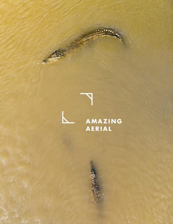 Aerial view of crocodiles swimming in Tarcoles river in Costa Rica.