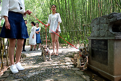 June 22, 2017 - Luoyang, Luoyang, China - Luoyang, CHINA-June 22 2017: (EDITORIAL USE ONLY. CHINA OUT) ..Two animal keepers walk the twins tiger cubs in Luoyang, central China's Henan Province, attracting many people's attention, June 22nd, 2017. The tiger cubs are 2-month-old. (Credit Image: © SIPA Asia via ZUMA Wire)