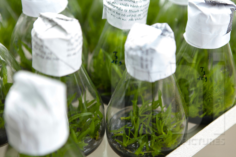 Detail of flasks containing rice samples for genomics research at LMI RICE Laboratory, Agricultural Genetics Institute, Pham Van Dong Street, Hanoi, Vietnam, Southeast Asia