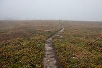 Single track trail heads into mist above the treeline on Kungsleden Trail, Lapland, Sweden