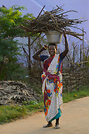 Woman carry fire wood on top of her head, Pulicat Lake, Tamil Nadu, India